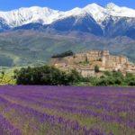 Kırların En Cazibelisi: Provence…